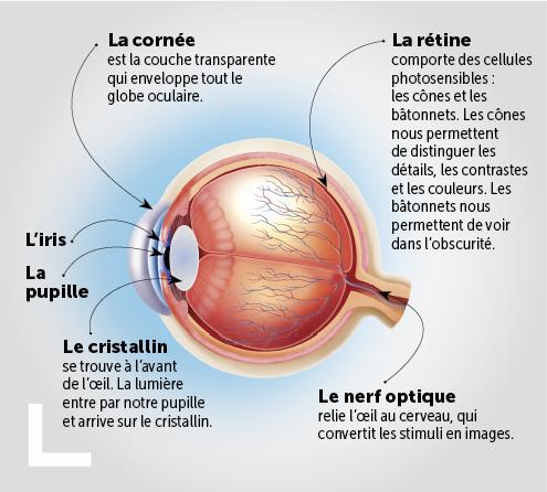 het-oog-uitgelicht-schema_fr2