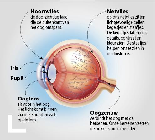 het-oog-uitgelicht-schema_nl2